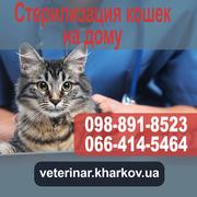 Стеpилизация koшек на дому - 950 грн. Харьков